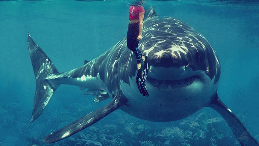 FOTOS: Tiburón ataca a un surfista en un brazo y este se salva al golpearlo en la nariz