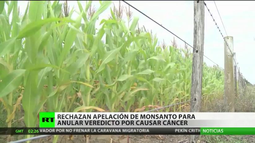 Rechazan apelación de Monsanto para anular veredicto por causar cáncer