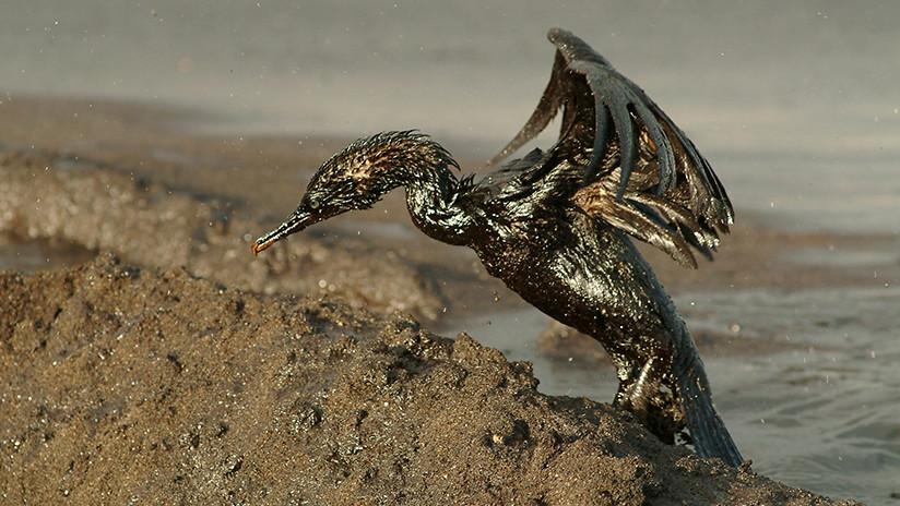 FOTOS: Publican imágenes satelitales del derrame de petróleo en la zona de Vaca Muerta en Argentina