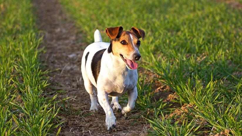 La mafia ofrece 5.000 euros por la cabeza de un perro antidroga