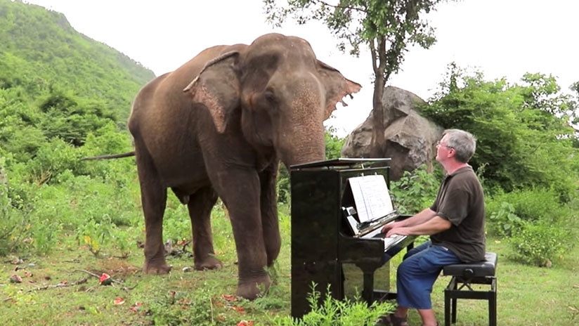 'Soy todo orejas': Pianista da conciertos para elefantes ciegos en un santuario de Tailandia (VIDEO)
