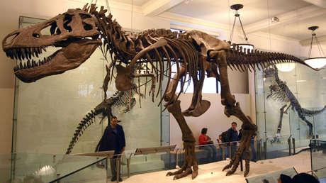 El diseño del Tiranosaurio Rex.