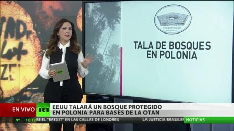 EE.UU. talará un bosque protegido en Polonia para ampliar base de la OTAN en la frontera con Rusia