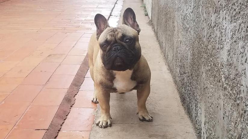 """""""¡Devuelvan a Putin!"""": Protesta en Bolivia para que aparezca un perro robado (VIDEO)"""