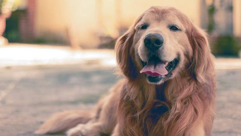 VIDEO: Un perro 'se roba' a otro en plena calle ante asombro de su dueña