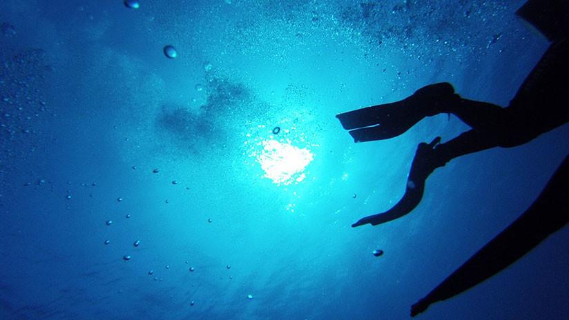 Buzos encuentran un gigantesco 'gusano de mar' de 8 metros de largo