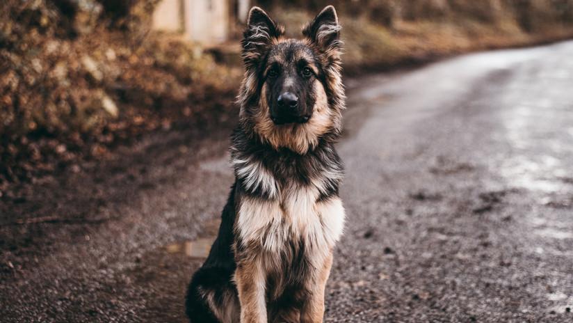 #Video Perro fiel espera en el lugar donde su dueña fue asesinada