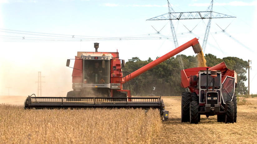 Ley de Semillas argentina: ¿Una iniciativa que beneficia a Monsanto-Bayer?