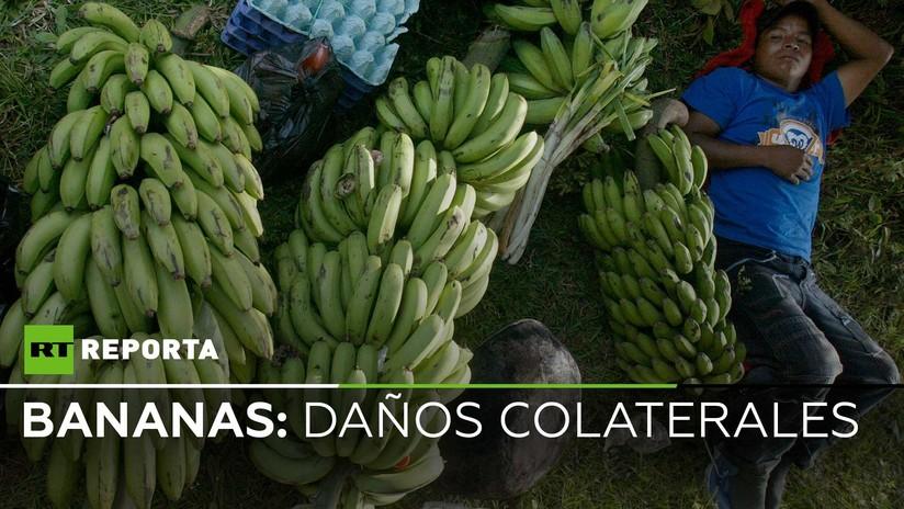 """Trabajadores en bananeras de Ecuador: """"Nos fumigan igual que al banano"""""""