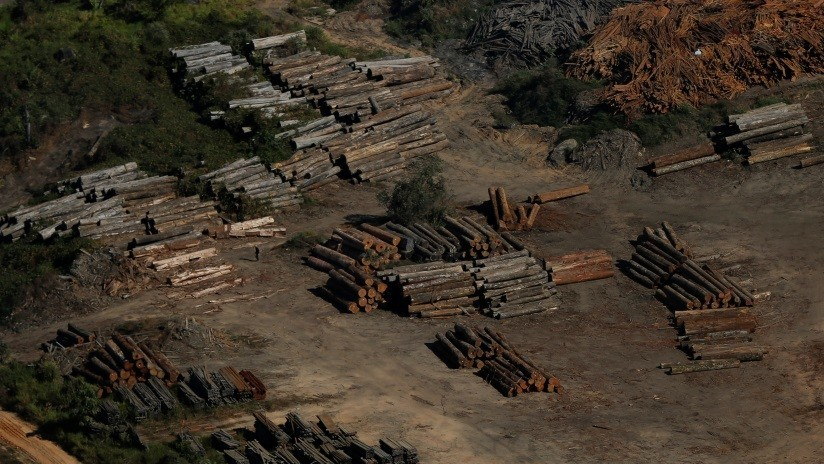 La Amazonia brasileña sufre la peor deforestación en una década