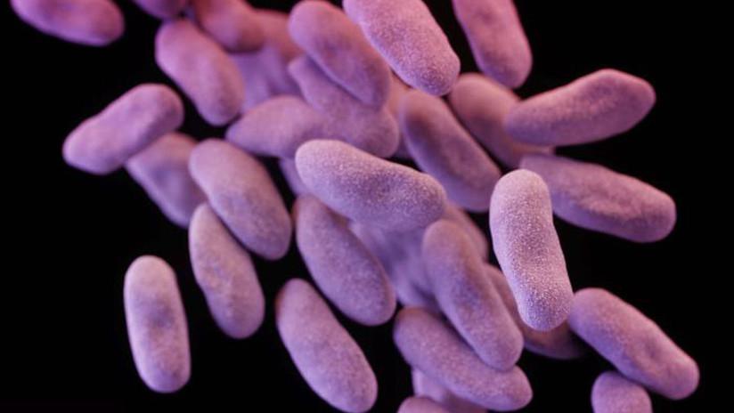 ¿Misiones espaciales en riesgo? Encuentran bacterias en la EEI resistentes a varios fármacos