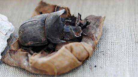 Una momia de escarabajo de la tumba de Jufu-Imhat