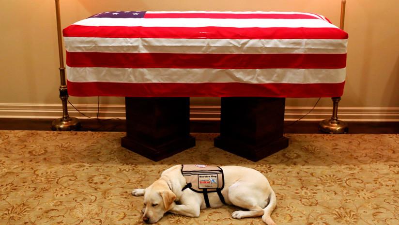 La foto del perro de George H.W. Bush resguardando su ataúd que hizo llorar a los internautas