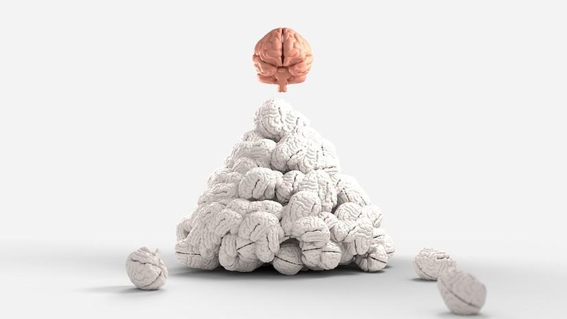 Investigan si el tamaño cerebral influye sobre el intelecto y la memoria y este es el resultado