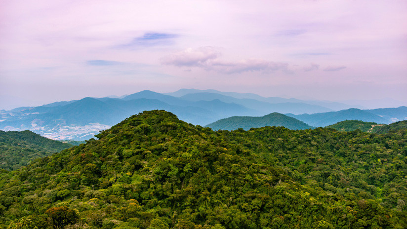IKEA replanta 3 millones de árboles y recupera una selva arrasada por la deforestación