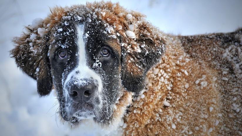 """""""A perro flaco todo son tuits de Reverte"""": el ingenio de la Red para refranes sin animales"""