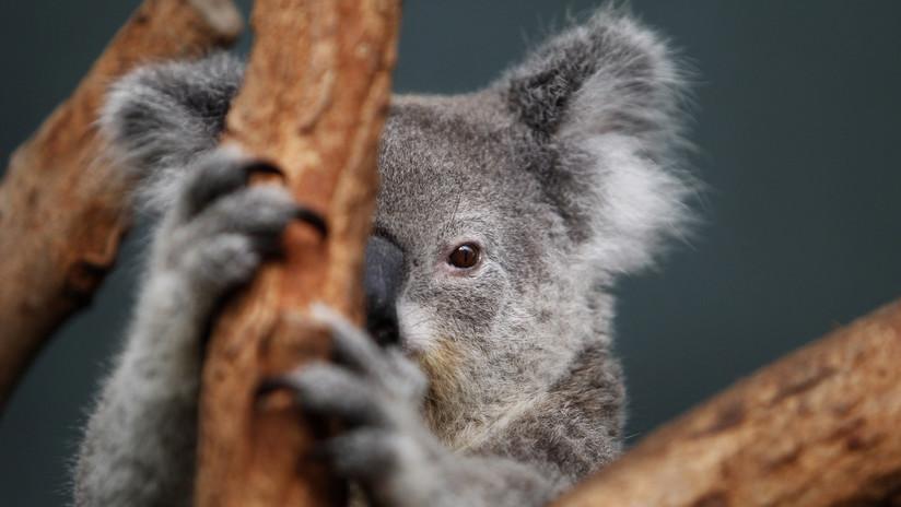 Revelan los animales más mortíferos de Australia y no son los que habría imaginado