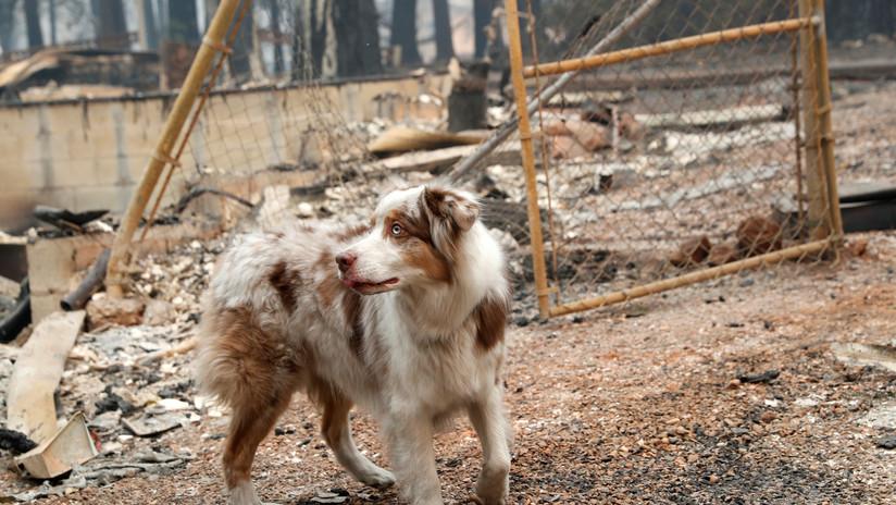 FOTO: Un perro abandonado espera a sus dueños durante un mes en una casa quemada