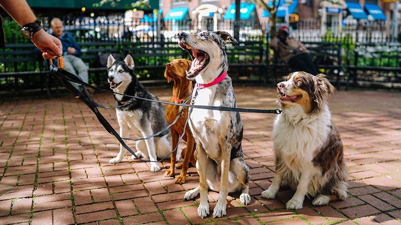 FOTO: Cuatro perros esperan en la entrada de un hospital mientras su dueño sintecho es atendido