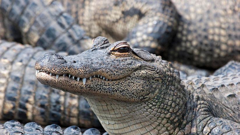EE.UU.: Creían que los caimanes se lo comieron, pero la verdad sale a flote 18 años después (FOTOS)