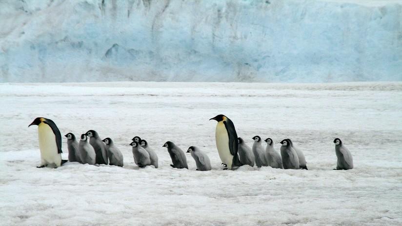 El turismo pone en peligro de extinción a las aves antárticas