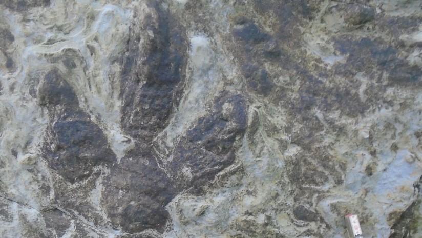Una colección de huellas de dinosaurios queda al descubierto tras fuertes tormentas
