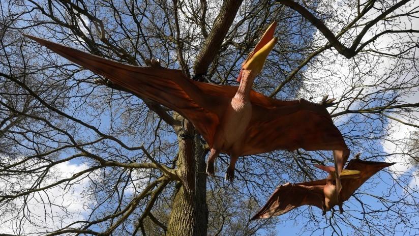 Los reptiles voladores del Jurásico lucían un plumaje bien desarrollado