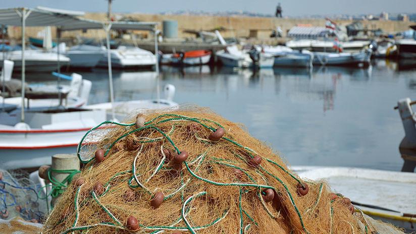 Alerta en el mar: La disminución de plancton podría hacer colapsar la red alimenticia de los océanos