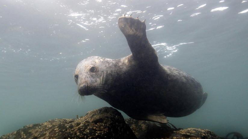 FOTO: Hallan una cría de foca durmiendo sobre una botella de plástico en una playa