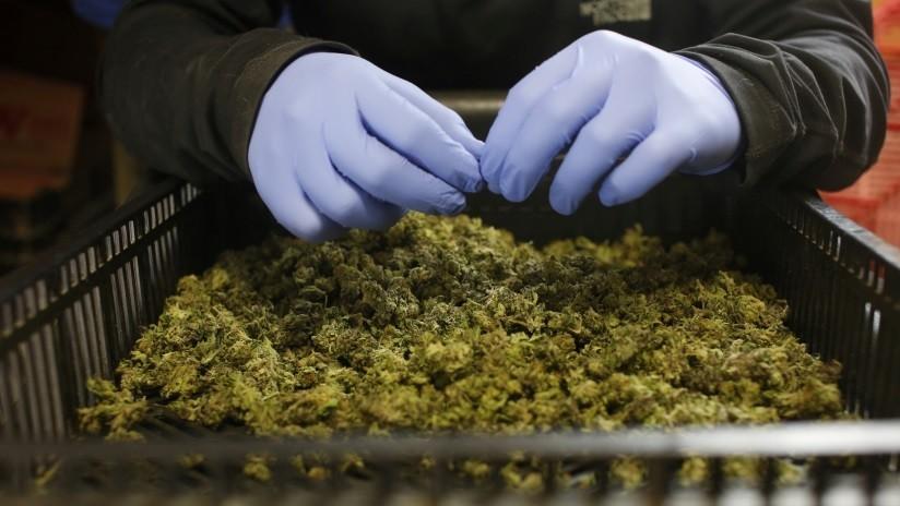 La potencia del cannabis se ha duplicado en Europa durante la última década