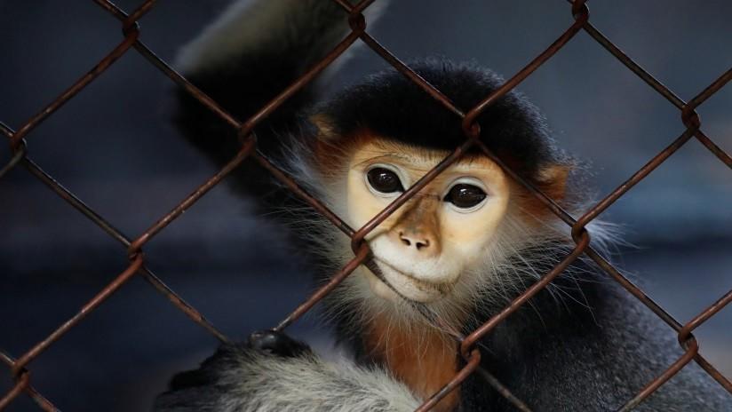 Tres años de cárcel a una mujer por masturbar a un mono