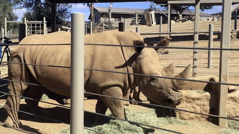 Una niña cae al hábitat de los rinocerontes salvajes en un zoológico de EE.UU.