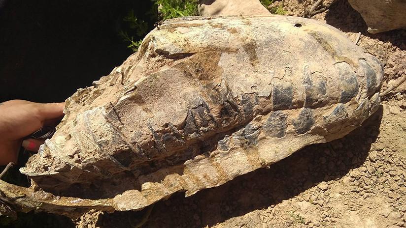 Encuentran en Argentina el esqueleto de un mamífero que se extinguió hace 8.000 años