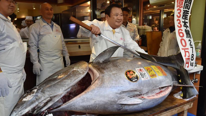 Un magnate del 'sushi' paga un precio récord de 3 millones de dólares por un atún gigante
