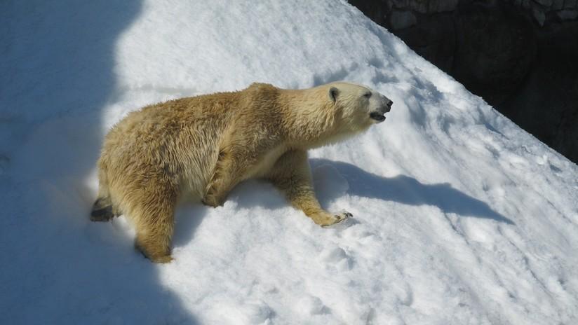 VIDEO: Dan de comer un pájaro a un oso, pero ¿intenta revivirlo?