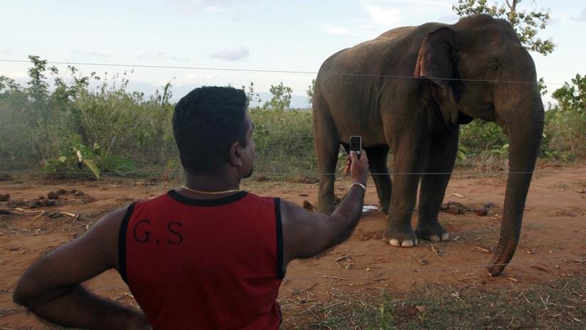 VIDEO: Elefante salvaje mata a un hombre que intentaba hipnotizarlo