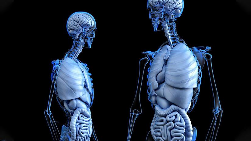 Un estudio halla vínculos entre la grasa del vientre y el tamaño del cerebro
