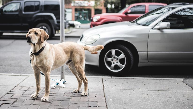 VIDEO: Un perro justiciero evita el robo a un empleado de una estación de servicio en México