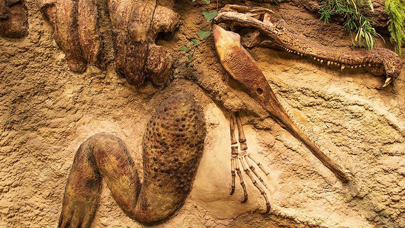 FOTOS: Cientos de personas rinden homenaje a un cocodrilo muy 'comprensivo' que murió a los 130 años