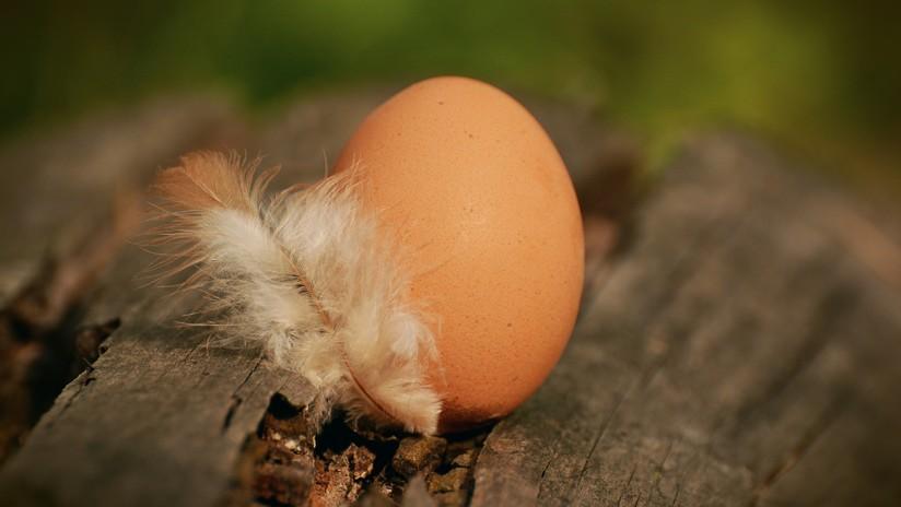 La foto de un huevo de gallina se convierte en la más popular de Instagram en toda la historia