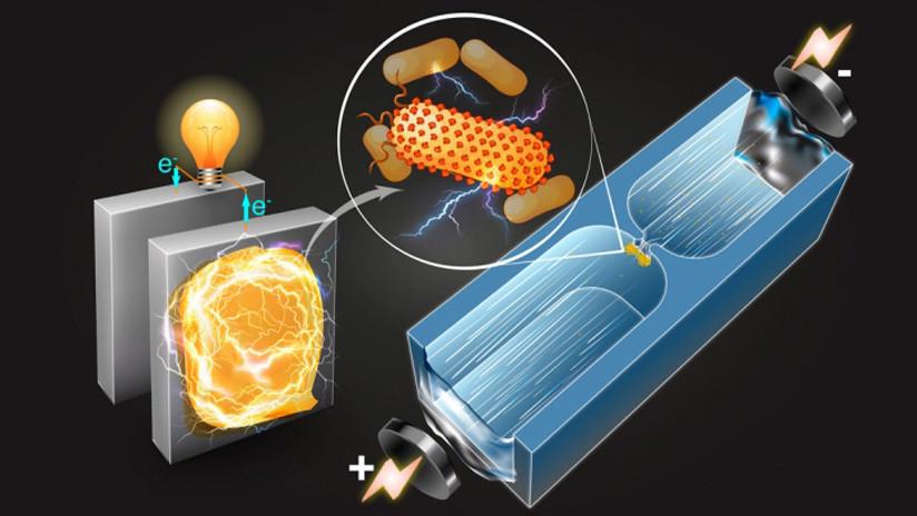 Científicos desarrollan técnica que permite identificar bacterias idóneas para producir electricidad