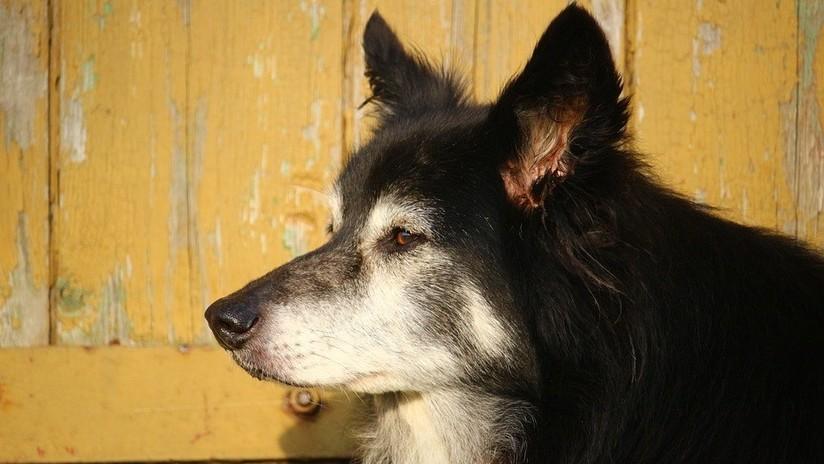 Karma instantáneo: Un hombre ebrio patea un perro y se lastima la cabeza (VIDEO)