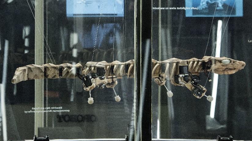 VIDEO: Esqueleto de reptil gigante de 300 millones de años 'resucita' como robot