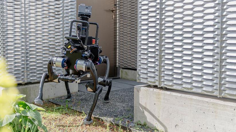 VIDEO: La IA de un robot de cuatro patas lo hace capaz de ponerse de pie si lo derriban