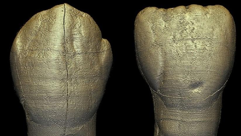 Encuentran sorprendentes similitudes con los humanos modernos en los dientes de un niño homínido