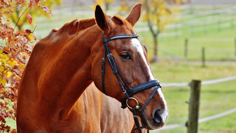 Muere un caballo de equitación en Escocia y en la caída mata a su joven jinete