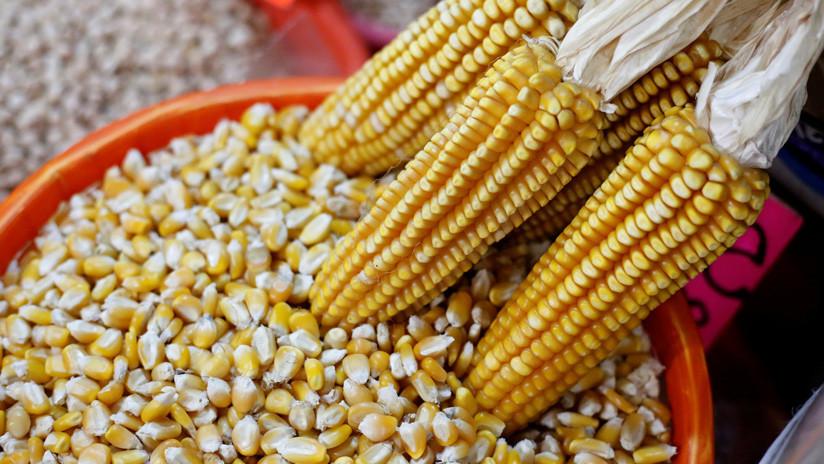 Resuelven un enigma genético del maíz de hace 58 años