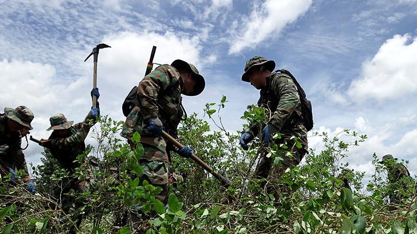 Evo Morales inaugura tareas de erradicación de coca excedentaria en Bolivia