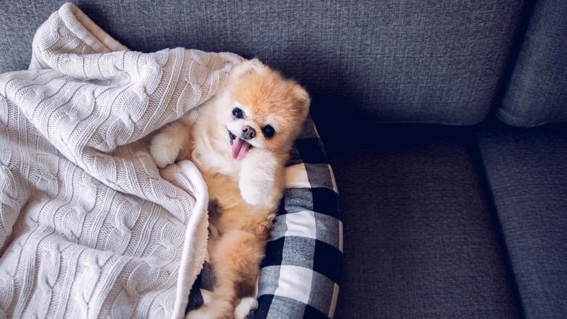 Fallece Boo, considerado el perro