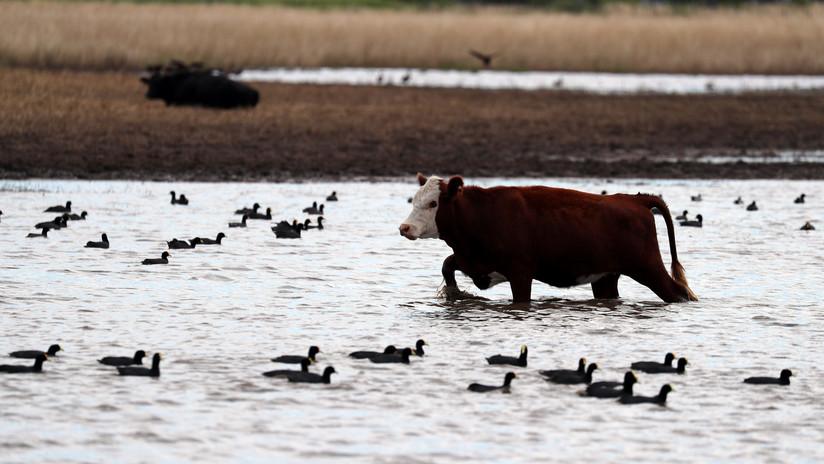 """""""Lluvias nunca vistas"""": Más de 8.000 evacuados por fuertes inundaciones en varias zonas de Argentina"""